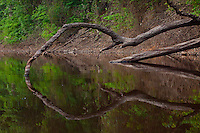 Reflections of jungle in Amazon River  Amazon Basin, Brazil  Amazonas region World  Heritage Site