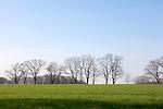 Europa, DEU, Deutschland, Nordrhein Westfalen, NRW, Rheinland, Niederrhein, Xanten, Fuerstenberg, Typische Landschaft, Baeume, Kategorien und Themen, Natur, Umwelt, Landschaft, Jahreszeiten, Stimmungen, Landschaftsfotografie, Landschaften, Landschaftsphoto, Landschaftsphotographie, <br /> <br /> [Fuer die Nutzung gelten die jeweils gueltigen Allgemeinen Liefer-und Geschaeftsbedingungen. Nutzung nur gegen Verwendungsmeldung und Nachweis. Download der AGB unter http://www.image-box.com oder werden auf Anfrage zugesendet. Freigabe ist vorher erforderlich. Jede Nutzung des Fotos ist honorarpflichtig gemaess derzeit gueltiger MFM Liste - Kontakt, Uwe Schmid-Fotografie, Duisburg, Tel. (+49).2065.677997, archiv@image-box.com, www.image-box.com]
