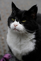 JUN 11 Larry the Cat at 10 Downing Street