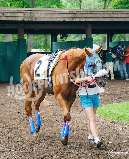 Betamerica Babe at Delaware Park on 7/4/16