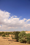 Israel, Northern Negev, Sayeret Shaked Park