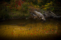Fall color along the Yellow Dog River in Marquette County Michigan's Upper Peninsula.