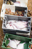 Fish catch, white fish and crabs in crates on the quayside in harbour of Barfleur, Normandy, France