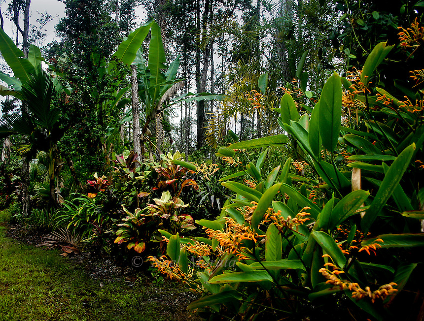 Hawaiian tropical gardens noel morata photography for Tropical garden design