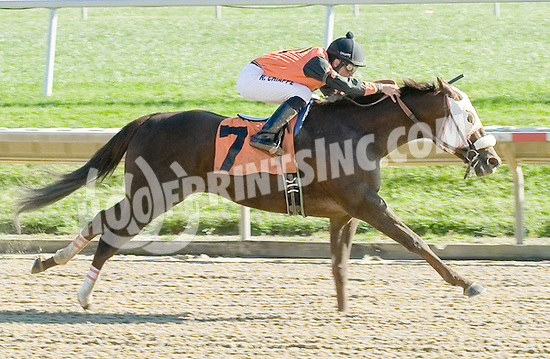 Storddim winning at Delaware Park on 11/5/11