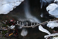 &quot;TWIG IN WINTER&quot;<br />