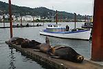 CA sea lion on dock