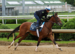 April 26, 2019 : Newspaperofrecord works out  at Churchill Downs, Louisville, Kentucky, preparing for a start in the G3 Edgewood Stakes on Friday, May 3. Owner Klaravich Stables Inc., trainer Chad C. Brown. By Lope de Vega x Sunday Times (Holy Roman Emperor) Mary M. Meek/ESW/CSM