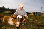 Spring cattle marking at Busi family corrals on Stoney Creek road the the Sierra Foothills of California.