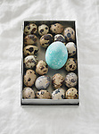 An open tin box full of small, spotted brown quail eggs, and one large dyed blue chicken egg.