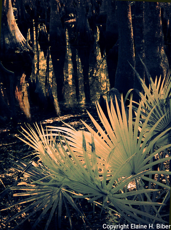 Palmetto at Beibler Audobon Reserve