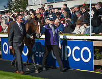 DUBLIN - SEPTEMBER 05: Nelson, ridden by Donnacha O'Brien, in the paddock before the Willis Towers Watson Champion Juvenile Stakes, Win and You're In for the Breeders' Cup Juvenile Turf, at Leopardstown Racecourse in Leopardstown, Co. Dublin, Ireland. (Photo by Sophie Shore/Eclipse Sportswire/Getty Images)