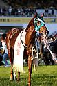 Horse Racing : Kinko Sho 2016