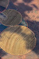 Felder im Kreis: AFRIKA, SUEDAFRIKA, 14.12.2007: Runde Felder in der Wueste Karoo, Bewaesserung durch den Oranje River, Afrika, Suedafrika, Orange free, State, Gariepdam, Wirtschaft, Landwirtschaft, Agrar, Agrarwirtschaft, feld, felder, bewirtschaften, Kreis, Kreise, rund, kreisfoermig, Wueste, Landschaft, trocken, bewaessern, bewaesserung, Oranje, Fluss, Flussbewaesserung, Anbau, Anbaugebiet, Muster, Getreide, Korn, Struktur, skurril, Luftbild, Draufsicht, Luftaufnahme, Luftansicht, Luftblick, Flugaufnahme, Flugbild, Vogelperspektive Aufwind-Luftbilder