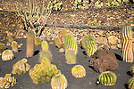 Cactus plants inside Jardin de Cactus designed by César Manrique, Guatiza, Lanzarote, Canary Islands, Spain.