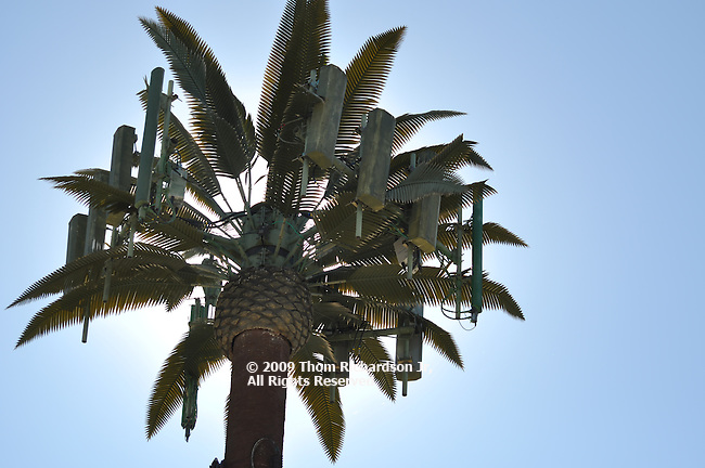 Cell phone cells diguised as a natural tree - Los Angeles Cellular Tree/Antennae,