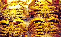 Crab display Pikes Place Market. Seattle