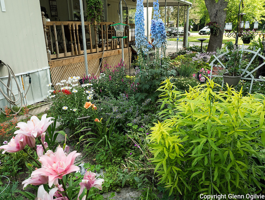 Connie Conant<br /> 1940 London Line, Unit 27 (Green Haven Estates Mobile home)<br /> Cottage Garden style<br /> 519-330-1717<br /> conant1connie@gmail.com<br /> <br /> My yard is all garden, grass is the enemy here. Perennials in the ground and annuals in pots. I have a very eclectic plant collection, and it seems when each one is blooming, that's my favourite plant. It is a very cottage-style garden. There are five kinds of bird feeders and a water feature. <br /> Watching the different seasonal plants flower, all the colours, & scents is a special joy. Another delight is watching the parent birds teach their little ones to feed from the several feeders available. <br />  Many kinds of bees frequent my garden, as well as butterflies and of course the hummingbirds! <br /> Chipmunks & squirrels clean up under the feeders along side the mourning doves and sparrows. <br /> The best things  about my garden are the never ending entertainment & learning opportunities.