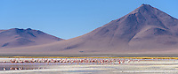 Flamingoes wade in Laguna Colorada at 14,035 feet above sea level.