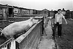 South Kirkby Colliery Miners Story, Yorkshire England.1979. Tommy (surname missing ) a retired miners rents land from the NUM for his pig small holding. He was a Bandsman at Hemsworth Colliery.