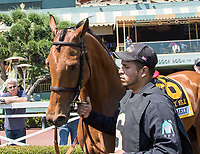 ARCADIA, CA. MAY 27: #6 Lady Eli in the walking ring before the Gamely Stakes (Grade l) on May 27, 2017 at Santa Anita Park in Arcadia, CA (Photo by Casey Phillips/Eclipse Sportswire/Getty Images)