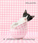 Xavier, ANIMALS, cats, photos+++++,SPCHCATS745B,#a# Katzen, gatos