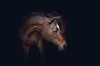 Equine Portraits | Wesh + Presto
