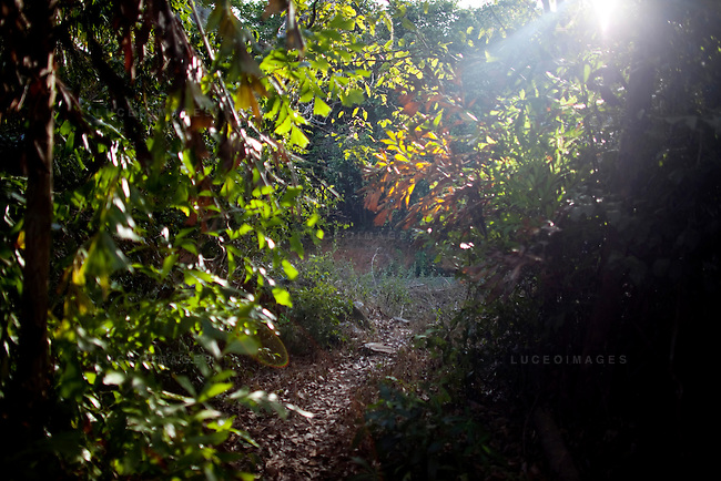 Forest trail to the Holy Cave on Con Son Island, part of the Con Dao Islands.The 16 mountainous islands and islets are situated about 143 miles southeast of Ho Chi Minh City in Vietnam, in the South China. Photo taken Thursday, May 5, 2010...Kevin German / LUCEO For the New York Times