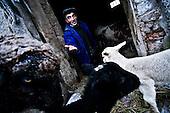 Czatachowa 01.2010 Poland<br /> Animals owners had a big problem, lack of water and frozen food, caused it was hard to feed Animals.<br /> Three atmospheric forces: rain, snow and frost have changed into an ecological disaster the Myszkowski district in the Czestochowskie province, located 230 kilometers south of Warsaw. Almost 95% of all trees are down.Thousands of homes are left without electricity.<br /> Photo: Adam Lach / Napo Images for Newsweek Polska<br /> <br /> Wielki problem mieli wlasciciele zwierzat, brak wody i zamarzniete pozywienie, powodowaly ze ciezko bylo je nakarmic.<br /> Wstepnie &quot;tylko&quot; 95% scietych drzew w dwoch powiatach. 0.5 miliona metrow szesciennych zniszczonych lasow..Tysiace gospodarstw bez pradu. Wszyscy maja swiadomosc, ze na kumulacje trzech niekorzystnych .zjawisk atmosferycznych rady nie ma.Trzy zjawiska kt&oacute;re zamienily jeden z obszarow Polski w istna katastrofe ekologiczna: deszcz, snieg i szadz.<br /> Fot: Adam Lach / Napo Images dla Newsweek Polska