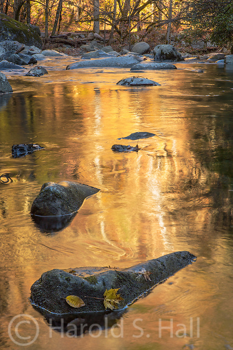 Gold color from the brilliant fall colors reflect in the Tremont River in the Great Smoky Mountains of Tennessee.