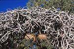 Elk antler arch in Jackson