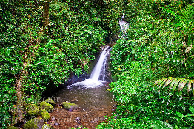 Waterfall in tjhe Monteverde Cloud Forest Biological Reserve, Costa Rica.