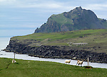 Vestmannaeyjar (Westman Islands) is a town and archipelago off the south coast of Iceland.<br /> <br /> The largest island, Heimaey, has a population of more than 4,000. The other islands are uninhabited, although six have single hunting cabins. Vestmannaeyjar came to international attention in 1973 with the eruption of Eldfell volcano, which destroyed many buildings and forced a months-long evacuation of the entire population to mainland Iceland. Approximately one fifth of the town was destroyed before the lava flow was halted by application of 6.8 billion litres of cold sea water.<br /> Photo by Mike Rynearson/Quest Imagery