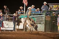 SEBRA - Gordonsville, VA - 8.9.2014 - Bulls & Action