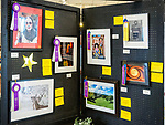 Best of Shows and Best of Divisions, Photography 80th Amador County Fair, Plymouth, Calif.<br /> .<br /> .<br /> .<br /> .<br /> #AmadorCountyFair, #1SmallCountyFair, #PlymouthCalifornia, #TourAmador, #VisitAmador