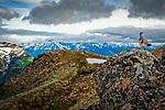 Ptarmigan in spring color on the rock at Bird Ridge. Chuach State Park, Southcentral Alaska, Summer.