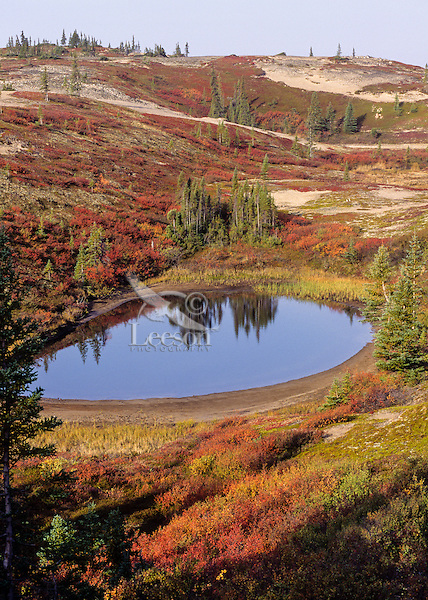 Small tundra pond set in sand eskers in the Barren Grounds of eastern Northwest Territories, Canada. Sept.  Near treeline--trees only grew on the eskers in this area.