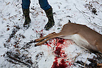 Mike Johnson looks at a young buck killed by his friend Donovan Nokes on Sunday, December 4, 2011 in Webster City, IA.