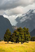Farmland with Fox Glacier in background, Westland Tai Poutini National Park, West Coast, South Westland, UNESCO World Heritage Area, New Zealand, NZ