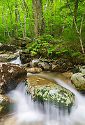 Lafayette Brook Scenic Area - Lafayette Brook in Franconia, New Hampshire USA during the spring months