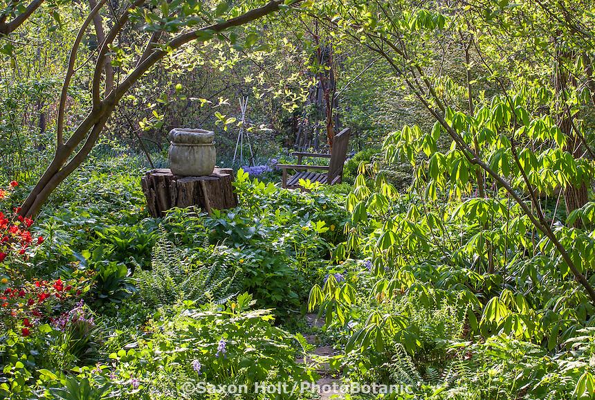 Spring woodland garden with native buckeye tree leafing out )Aesculus parviflora), Boninti Garden, Virginia