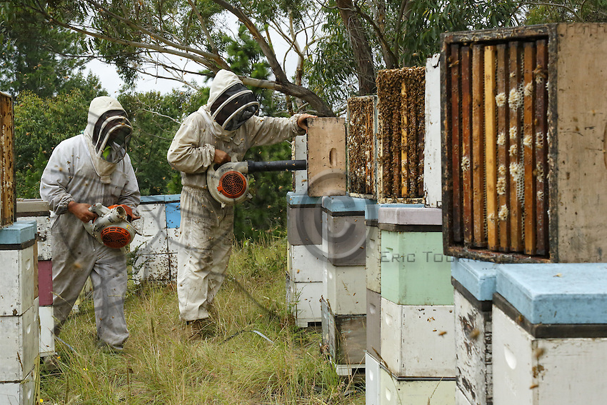Honey Harvest At Ben Browns Apiary Near Newcastle On The East Coast 27 Years Old