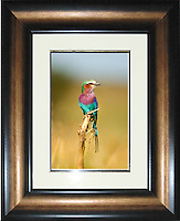 Image Size:  10&quot; x 15&quot;<br />