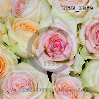 Gisela, FLOWERS, photos+++++,DTGK1849,#f# Blumen, flores, retrato