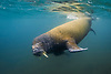 Seals, Sea Lions & Walrus