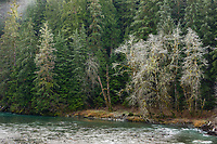 Stillaguamish River & Forest