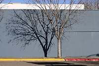 A bare tree, planted where the yellow and red curbs meet, casts a shadow in the late winter sunlight on a street in downtown Ukiah in Mendocino County in Northern California.