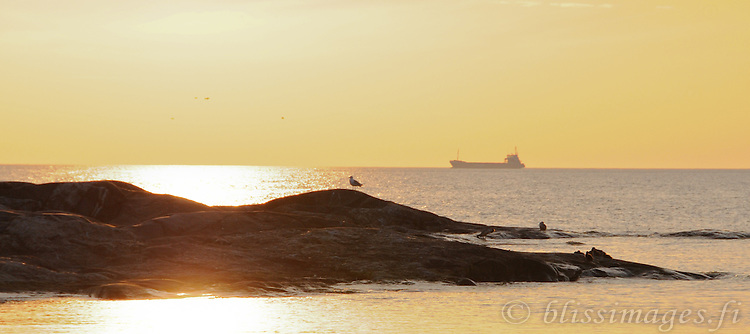 Ship and seagull on the rocks silhouetted in yellow light.