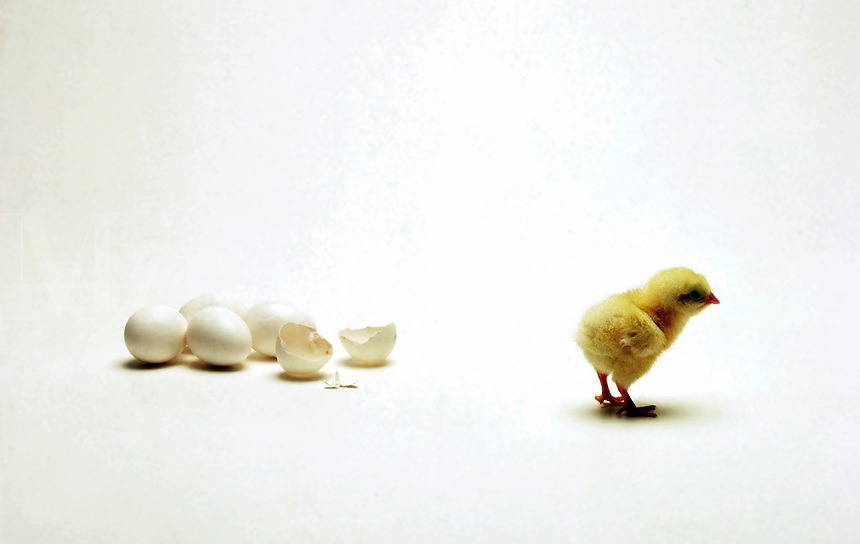 A chick walks away from an open egg surrounded by unopenened eggs.