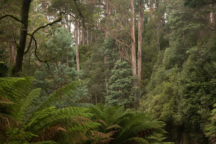 Eucalypt forests,pasture land, and rainforests cover northeast Tasmania